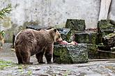 Christmas for the Bears, 24.12.2018, Advent and Christmas in Český Krumlov, photo by: Lubor Mrázek