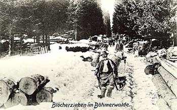 Šumava, pulling logs on hand sleighs in winter, historical photo, foto: Seidel