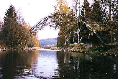 Vltava River, bend with a birch